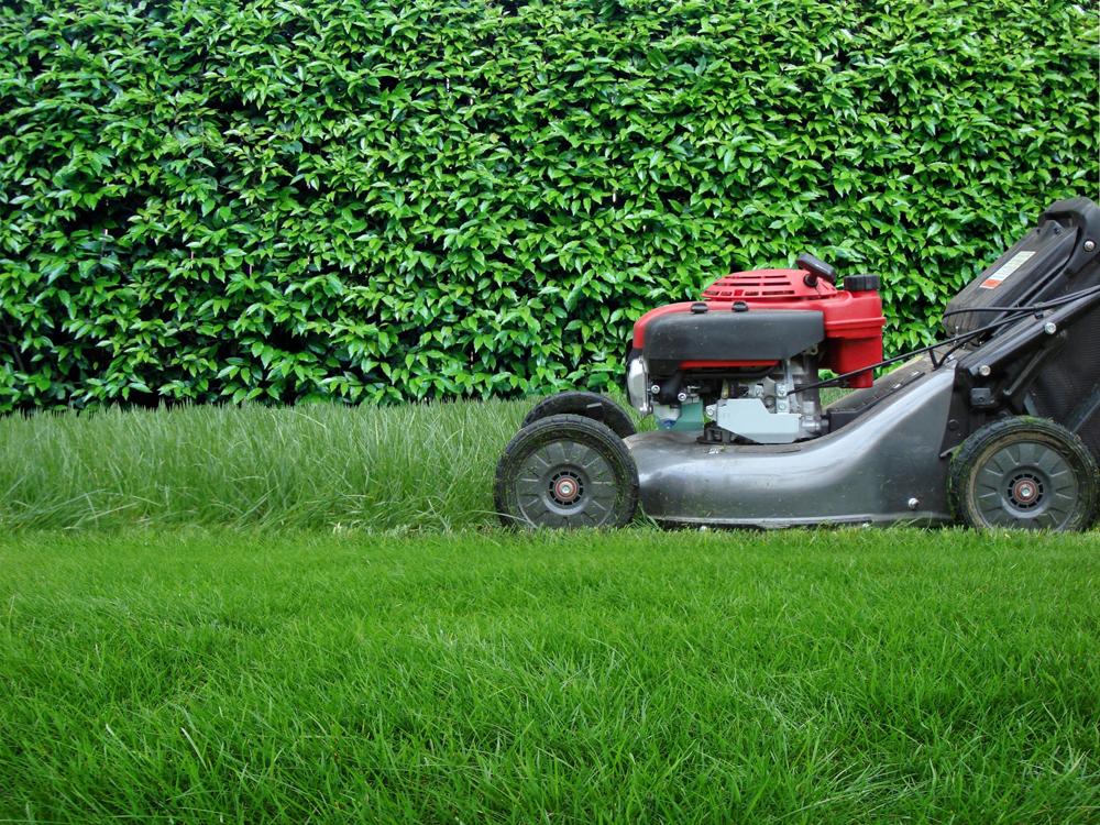 Services de bricolage et jardinage domicile craynest for Service a domicile jardinage
